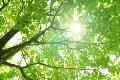 素材ナンバー 1844154 : 「新緑と太陽_01」